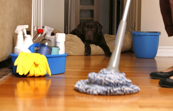 5 Essential Ideas Whenever Employing the House maid Support